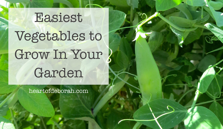 5 easiest vegetables to grow in your garden