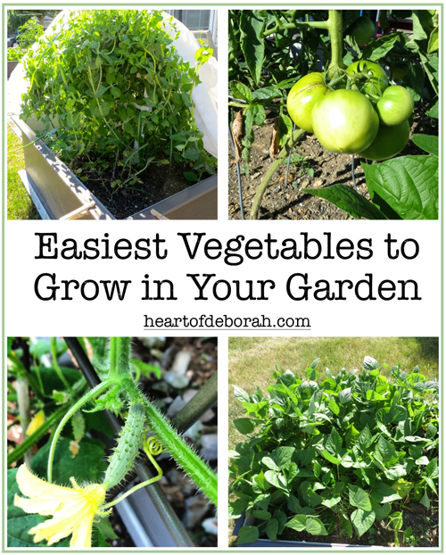5 Easiest Vegetables to Grow in Your Beginner Garden. Heart of Deborah