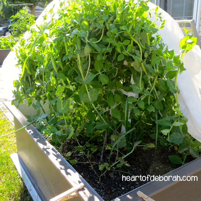 easiest vegetables to grow in your garden