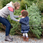 Choosing the Best Christmas Tree
