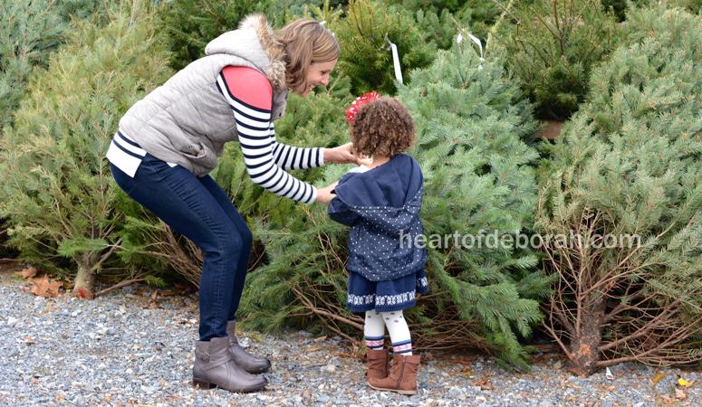 Choosing the Best Christmas Tree